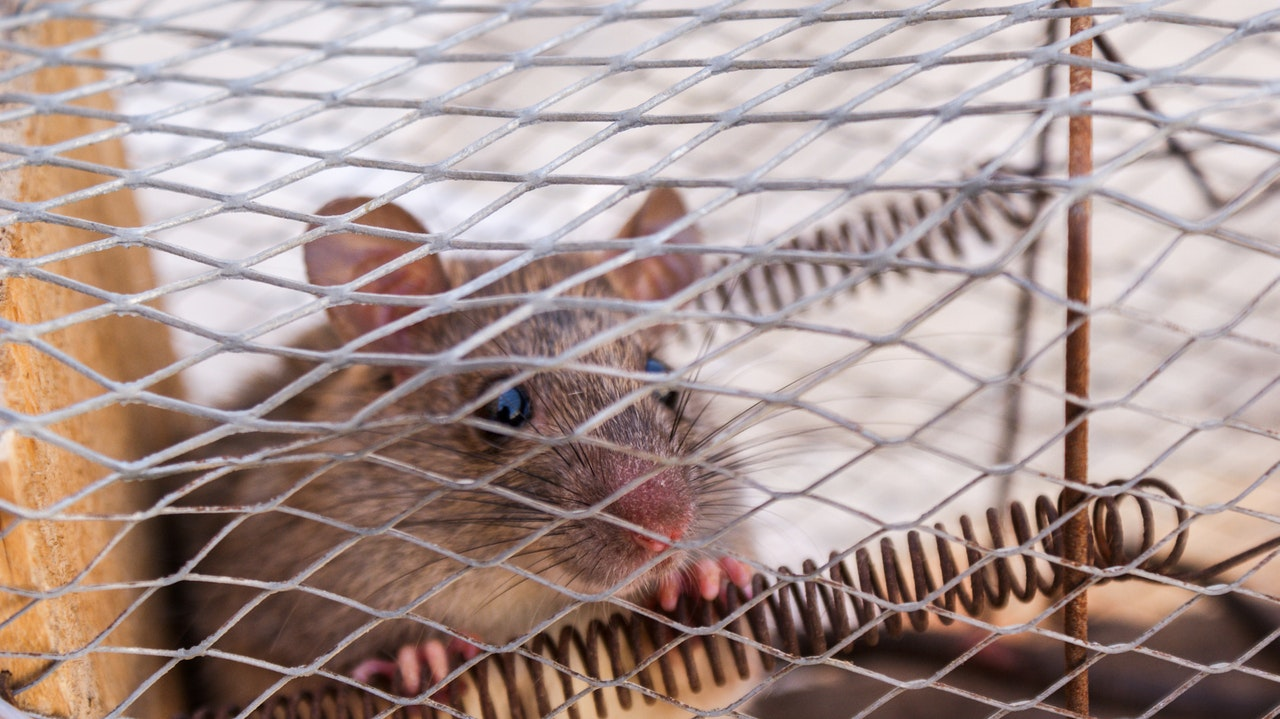 Dealing with Mice and Rat Pest Control in Atlanta
